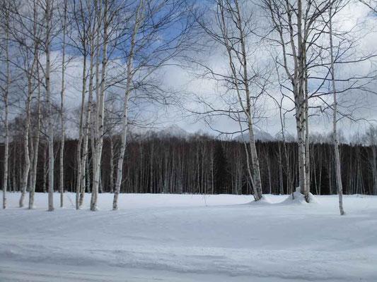 林の向こう、三股山荘脇から見えるビリベツと西クマネシリ(地元ではおっぱい山と言っているそう)