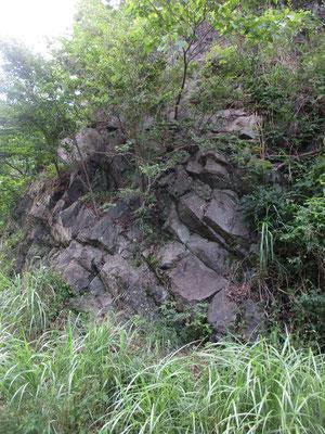 法華峯林道途中のこの岩壁にはカネハラニシキガイという貝殻模様の岩がたくさんあります 昔、海だった証拠