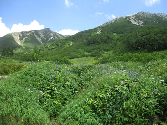 心癒される眺め 左がワリモ岳 右が鷲羽岳