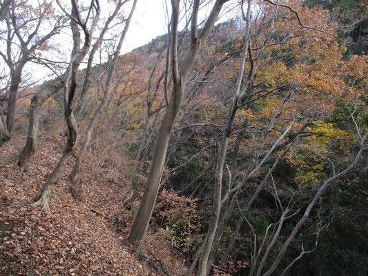 まだ色づいた葉がきれいに残っていました