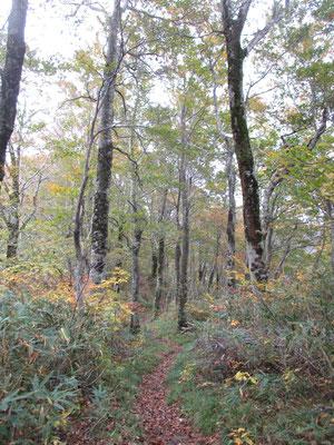 だんだんと登ってくると、森全体が色づいてきた感じ