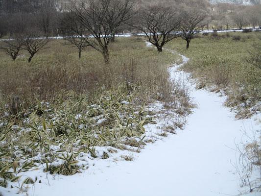 沼の原 白い道がつづく