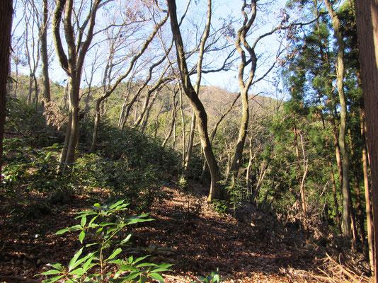 小さな沢を渡り尾根までちょっと登ると、その向こうにはいい感じの林がひろがっていました