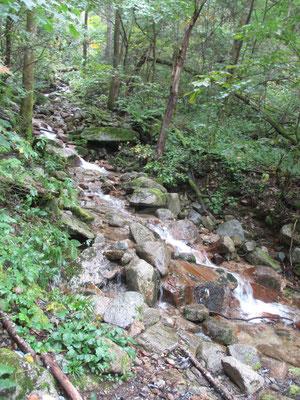 登山道は至るところから小さな沢が入り込み、道自体が沢になっている箇所も多くある