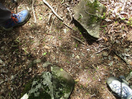 登山靴にはさまれた地面をよく見てください 緑の細い棒状のものが無数に落ちています 新緑の季節=オトシブミの最盛期です!