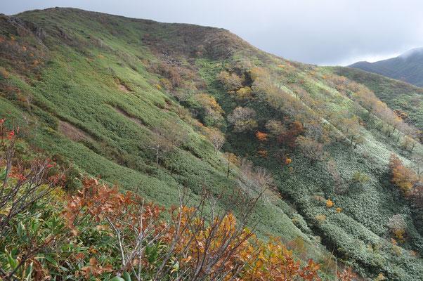 高度を上げ樹林帯を抜けると一気に雄大な景色が拡がり、誰しも歓声をあげます