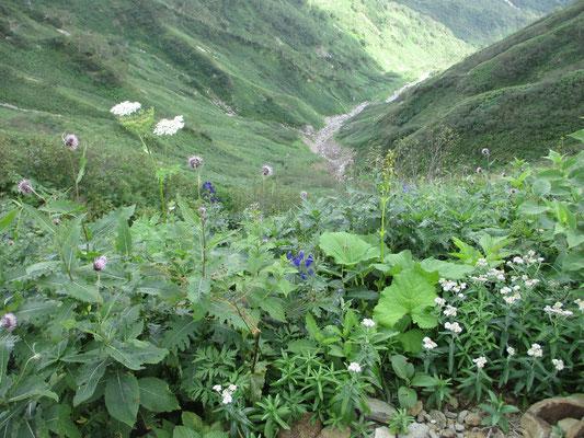 花畑を前景に谷の奥に向かう