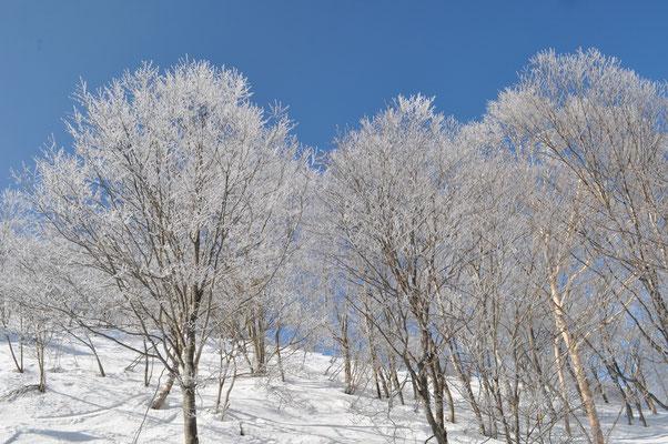 リフトで登っているとき 一番霧氷がきれい