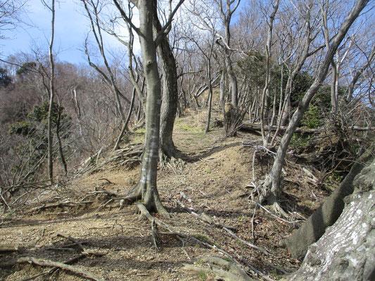 山が削り取られて遮るもののない松石寺尾根の上部はすでに倒木だらけで荒涼とした感じになっている