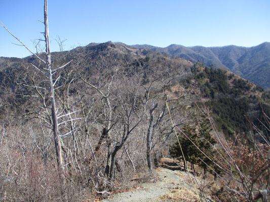 縦走路として甲州高尾山からつづく向こうにはセットで登るような棚横手のピークが見える