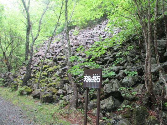 車を停めたところから林道歩きが一時間半ほどありますが、その途中にこんな岩粒雪崩のような不思議なものに出会いました。どうしてこんなに揃った大きさの岩塊が一カ所に上方から埋めるようにあるのでしょう? すごく不思議です。