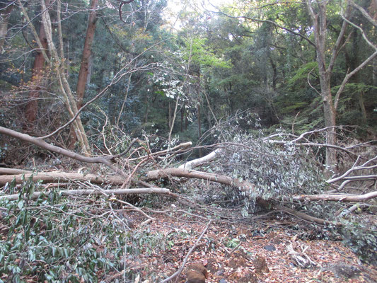 下山に使った田代への登山道も、下の堰堤付近では大きな木が倒れていた