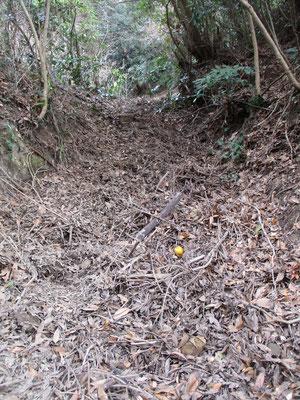 「狢」の分岐で「牛道」(東の方)につづく登山道 これは枝や落ち葉などの堆積で道に見えないほど