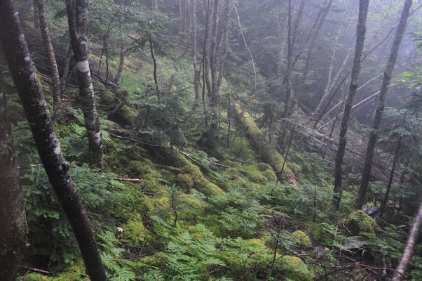 きれいな苔むす森