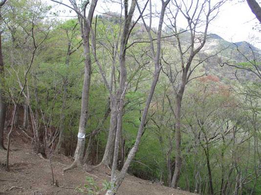 淡い春色の華厳山