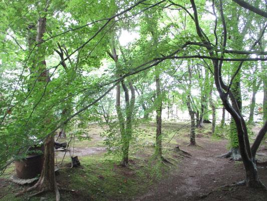 沓掛館山の緑陰 いつもならバザー会場となっていた