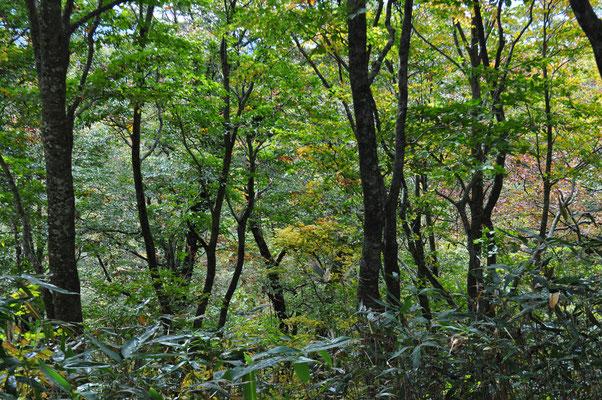 次第に秋色から緑になってきて…