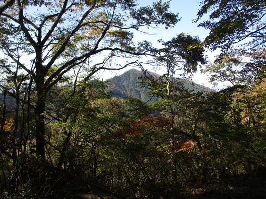 樹林越しに見えるのは仏果山方面