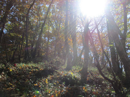 秋の午後の陽ざしは早く傾きます