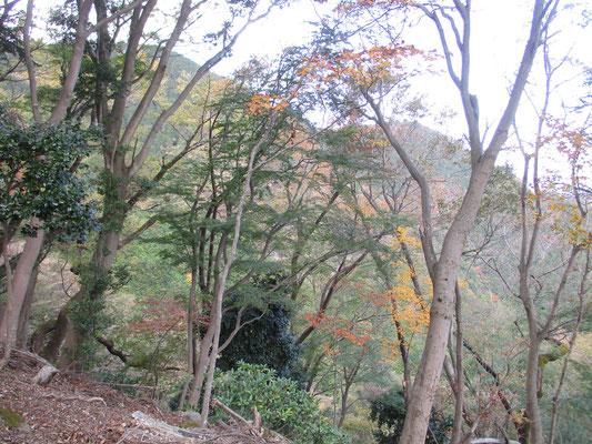 自然林の林相が美しい西山