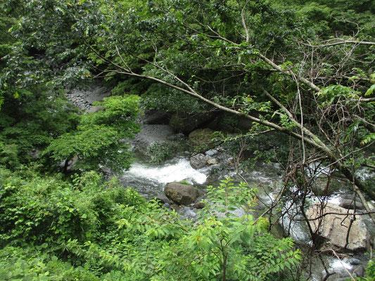 道志川 梅雨時なので水量が多いが、水は澄んでいる