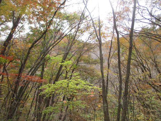 笹尾根の秋4