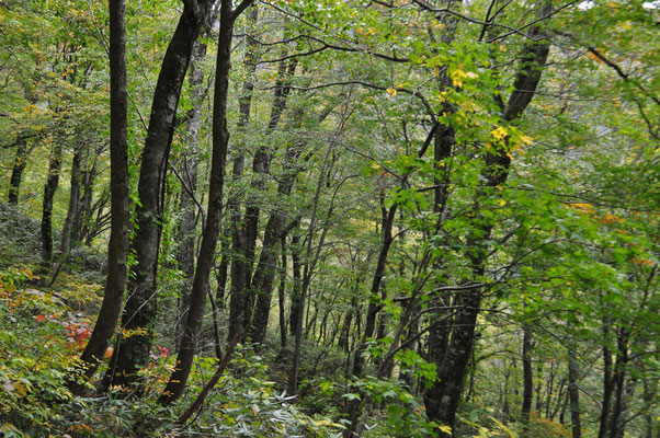なんとも気持ちのよい林