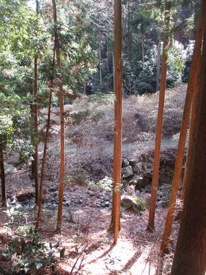 このミツマタ桃源郷のある「大平登山口」から急登に取り付き、松石寺尾根を辿り登山開始 ここから見下ろすミツマタの群落はまた見事