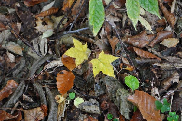 秋色の下山12