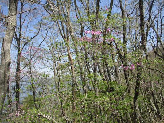 美しく木の芽が萌える