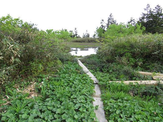 ちょっと大きめの池塘
