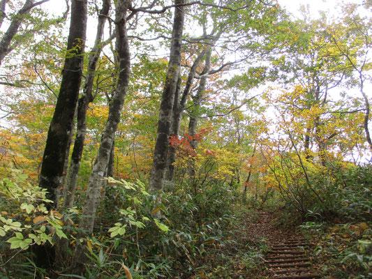 かなり秋の森になってくる