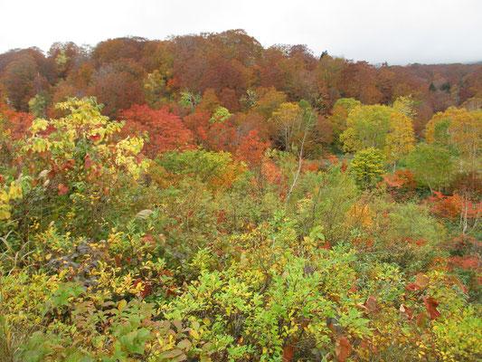 大沼周辺のブナの山と色とりどりの紅葉