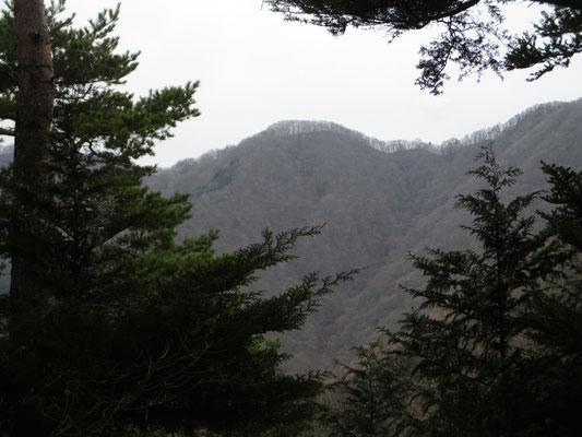 棚ノ入山から植林越しにやっと見える赤鞍ヶ岳