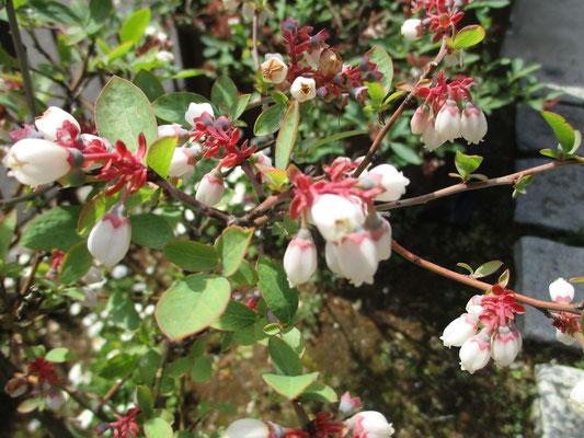 花が落ちた萼には、すでに小さな小さな実がつき始めている
