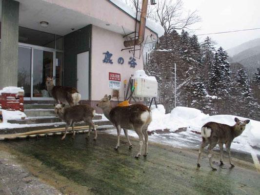 次に出て来る人を待っている 子鹿は頭に雪を乗せていた