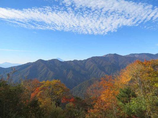 秋らしいうろこ雲の空に色づき始めた木々 いかにも秋と言った風情です