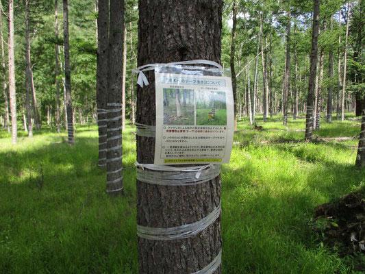 シカの樹皮食いから木を守る紐についての説明板