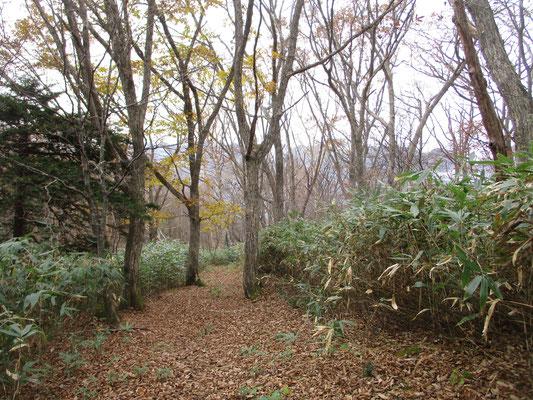 落ち葉が敷き詰められた雰囲気のよい登山道