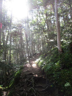 針葉樹の森に陽が差し込み美しい
