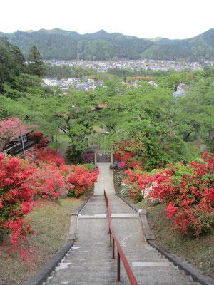 向こうの奥多摩の山並みを借景に、参道の階段脇を満開のツツジが飾ります