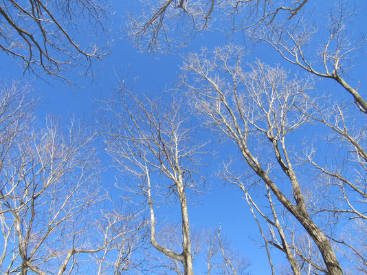 青空に樹々の枝が美しく映える