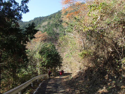 林道をゆっくり歩く