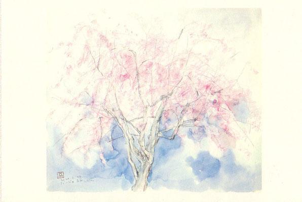 だいごの桜