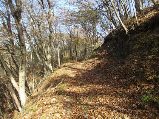 いい雰囲気の山道を行く