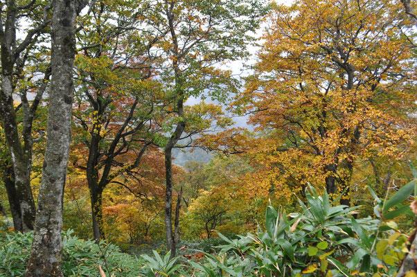 秋色の下山7