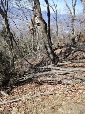あまりの倒木に途中から林道に逃れ、朝と同じ林道を辿り戻った