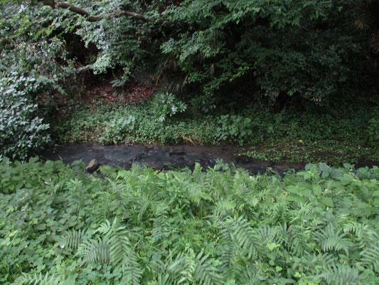 敷地内には沢(小川)もあるが、水は白く濁っていて見た目からもきれいそうではない 上流部に何か施設があるから?