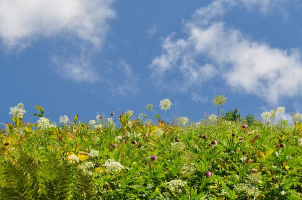 花畑と晩夏の青空