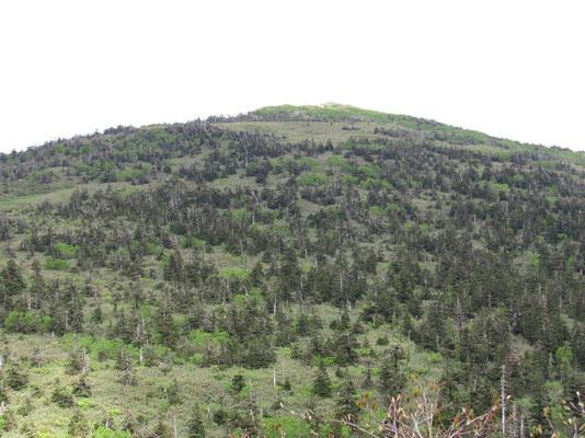 針葉樹がきれいに山を飾っている